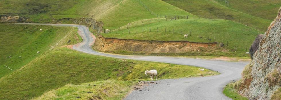 wie sauber müssen wanderschuhe für neuseeland sein